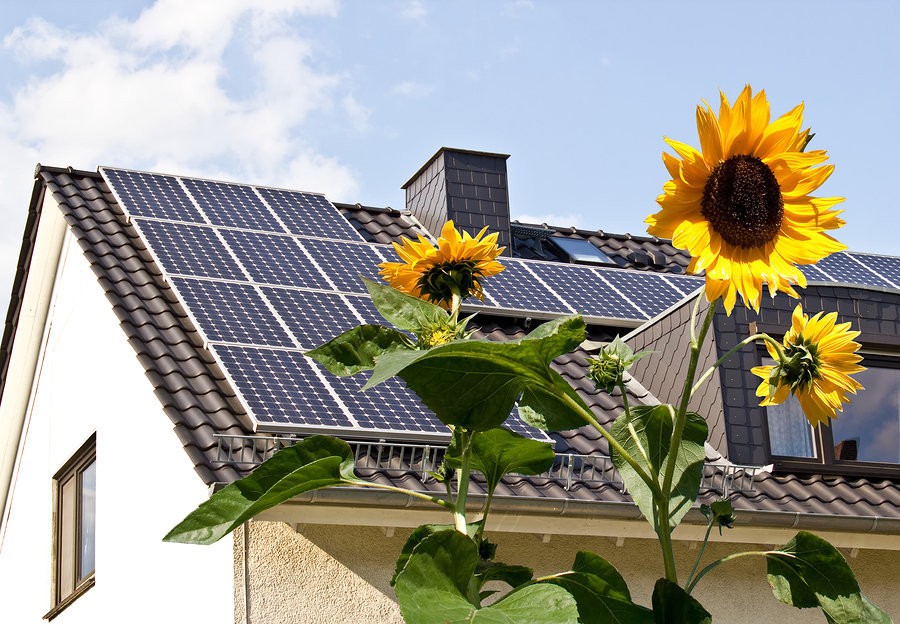 Tampa Homes With Solar Panels